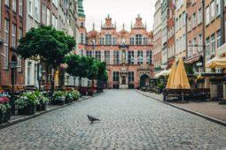 Verkehrsunfall – Bremsen wegen einer Taube auf der Straße