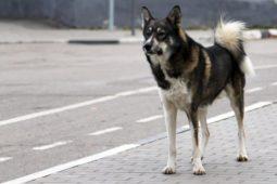 Verkehrsunfall: Zusammenstoß eines Hundes mit einem Kraftfahrzeug