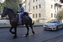 Verkehrsunfall: Haftungsverteilung zwischen Fahrzeug und einem auf der Straße befindlichen Pferd