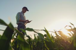Wildschadenersatz – Schaden auf landwirtschaftlicher Fläche mit angebautem Mais