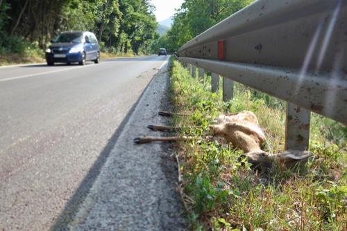 Wildunfall – Beweislast für Fahrzeugschaden durch Kollision