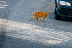 Haftungsquote - Ausweichen vor einer die Straße plötzlich querenden Katze